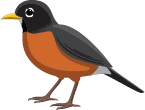 illustration of a robin