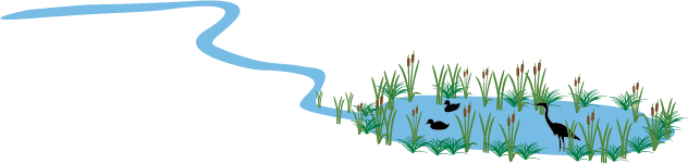 illustration of birds in an urban wetland