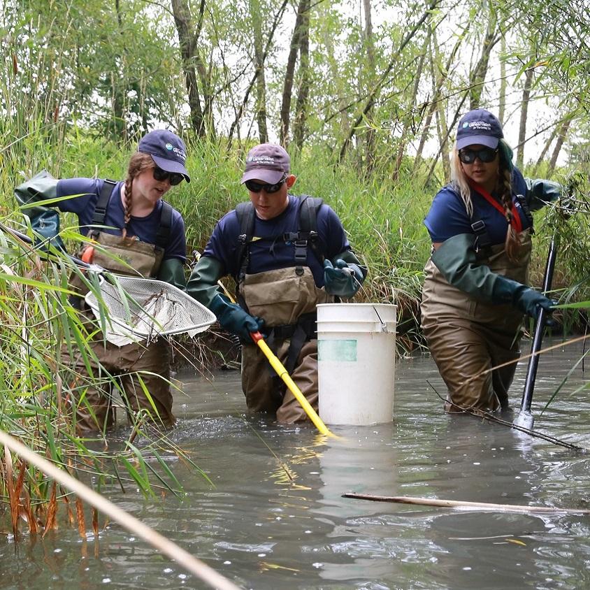 TRCA field staff monitoring fish habitat