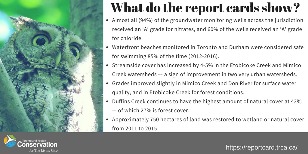 graphic displaying positive results of watershed report cards